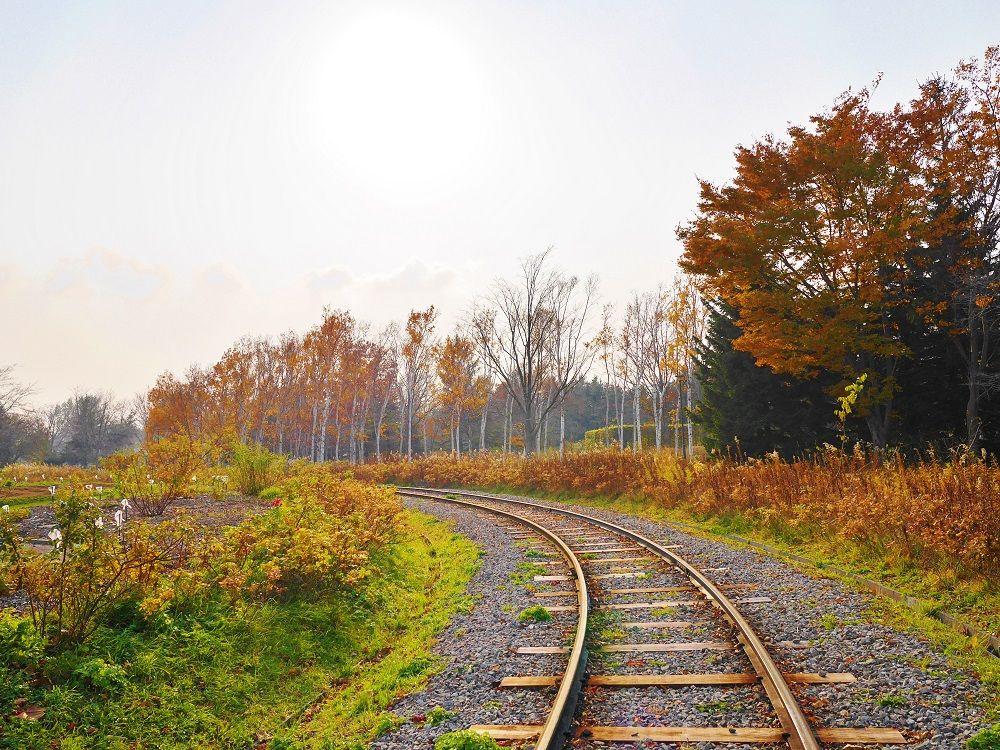 小さな鉄道ファンにも嬉しいリリートレインから秋を観賞