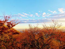 視界に広がる紅葉&関東平野の絶景!栃木県太平山「謙信平」|栃木県|トラベルjp<たびねす>