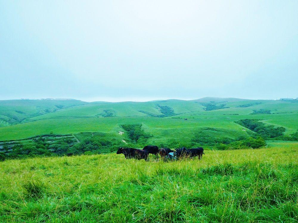 日本最北端の大自然に感動!「宗谷丘陵」と「宗谷海峡」