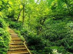 360度札幌の大パノラマが待っている!親子で登れる藻岩山登山