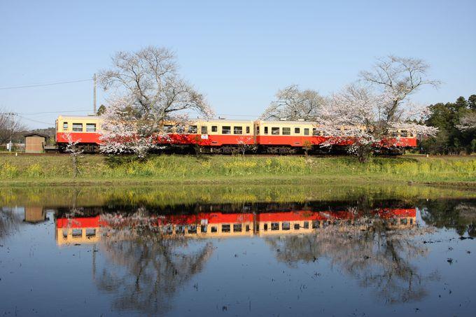 水鏡と桜と小湊鐵道のコラボレーション…飯給駅