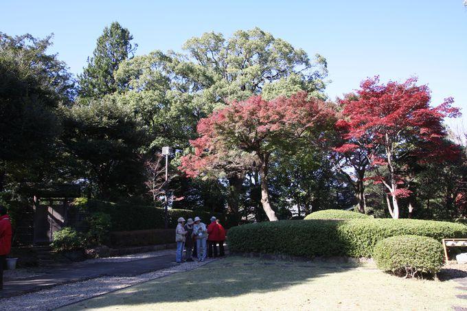 季節の草花や紅葉がすばらしい〜与謝野晶子の歌碑めぐりで公園散策