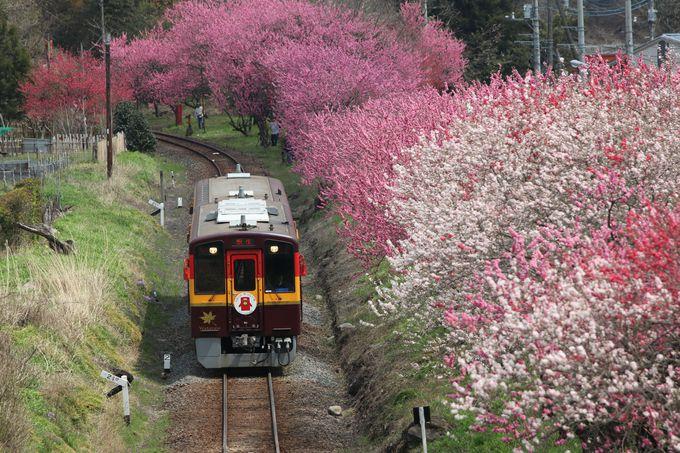 渡良瀬川に沿って桜と花桃の桃源郷へ~わたらせ渓谷鐵道乗り撮り歩き