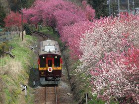 渡良瀬川に沿って桜と花桃の桃源郷へ〜わたらせ渓谷鐵道乗り撮り歩き