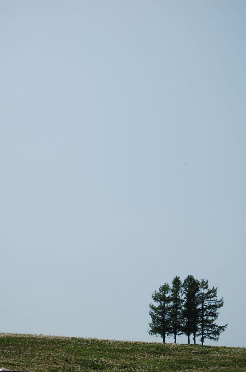 今話題のスポット『嵐の木』を中心に美瑛・富良野の旬と星空を訪ねる旅