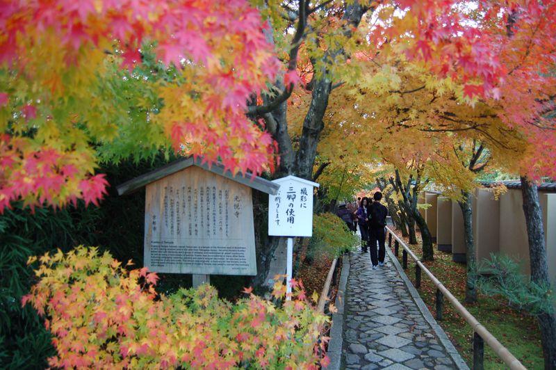 京都の厳選紅葉スポット!3つの人気のお寺を一気に回れる穴場 源光庵を中心に「鷹峰」散策