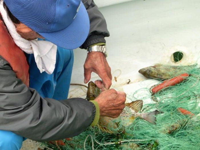 幅広い年代で漁が受け継がれる辺野古