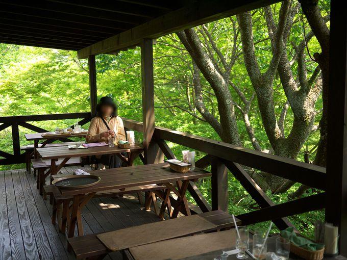 緑の中のカフェ
