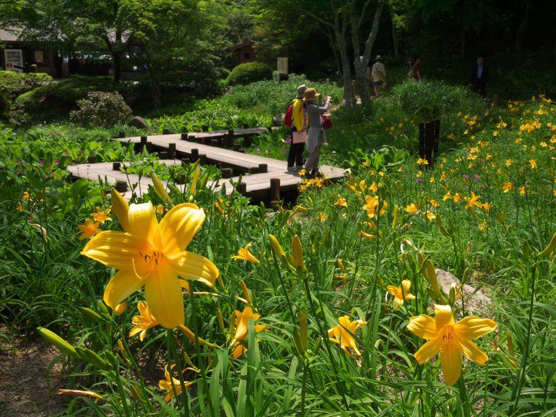 六甲高山植物園は神戸の避暑地!涼しい空気のなか高山植物を楽しもう