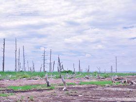 「この世の果て」と呼ばれる場所・北海道野付半島トドワラ