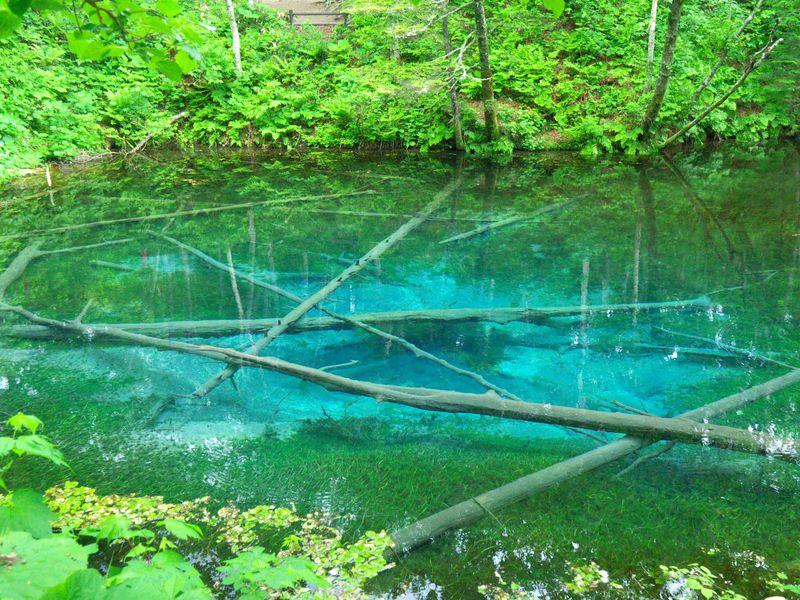 「神の子池」の神秘のブルーを探して絶景の裏摩周へ!