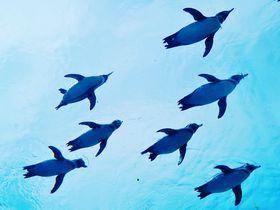 ペンギンがビュンビュン飛ぶ!長崎・九十九島の「森きらら」