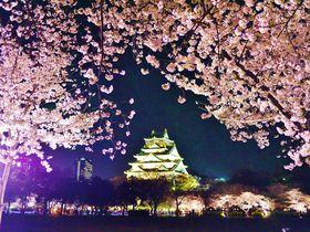 大阪城で満開の夜桜を!「大阪城お花見・夜桜イルミナージュ」