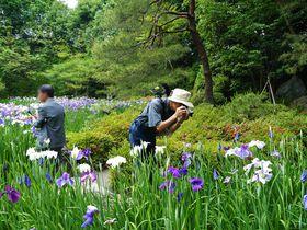 平安神宮神苑の無料開放は年2回!6月の開放日は花菖蒲(ハナショウブ)が見ごろ|京都府|トラベルjp<たびねす>