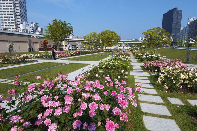 都会のオアシス「中之島公園」で一味違う大阪観光を