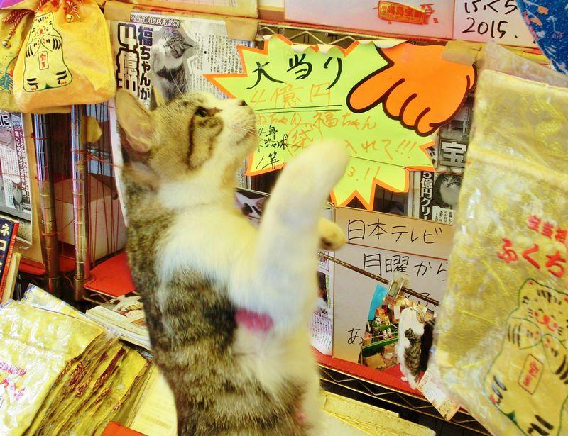 宝当神社(唐津・高島)にはジャンボ宝くじ当選を呼ぶリアル招き猫がいる