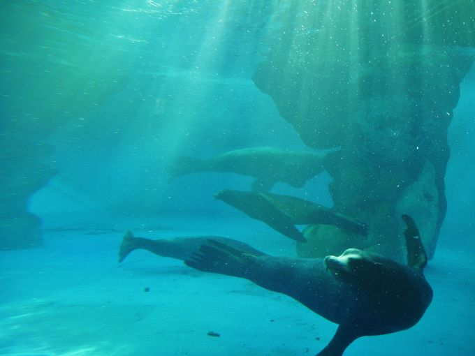 海獣の王国