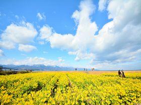 守山の菜の花を目と舌で楽しむ!セトレマリーナびわ湖のイタリアン|滋賀県|トラベルjp<たびねす>