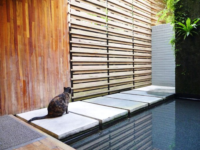 猫が自由に出入りするカフェ