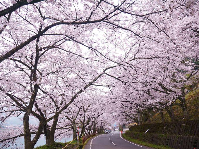 海津大崎やメタセコイア並木へも自転車で行ける