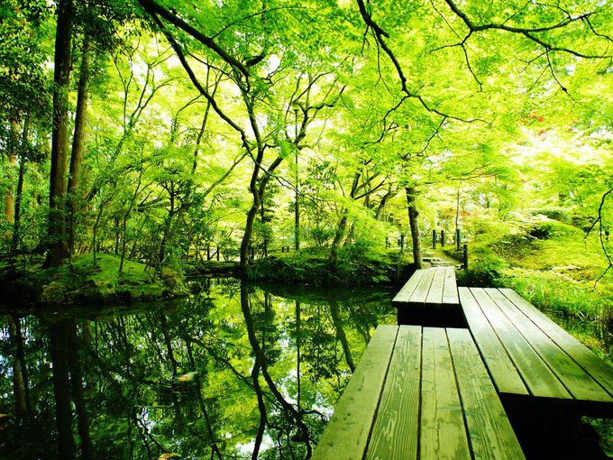新緑の天授庵