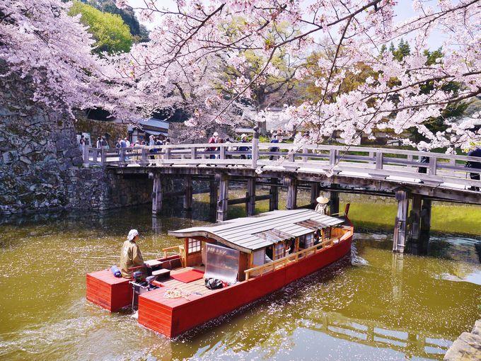 お堀沿いの桜は地元の人の憩いの場