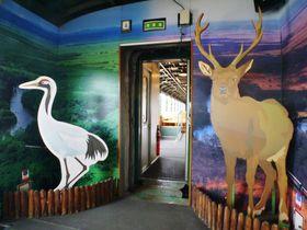 「くしろ湿原ノロッコ号」予約&おすすめ指定席ガイド|北海道|トラベルjp<たびねす>