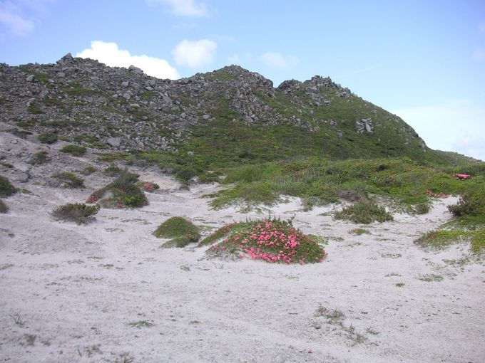 実は「花の百名山」☆季節によって楽しめる天上山