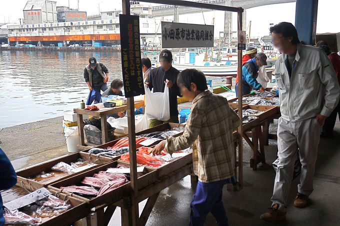 一番人気!朝獲れの「鮮魚」は本当にお得!