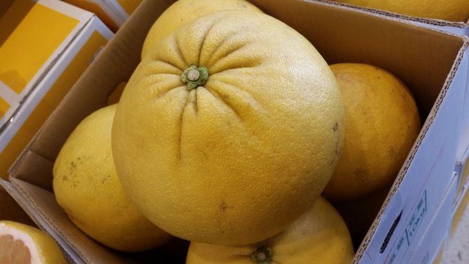 高知名産「文旦」や「ゆず」などの柑橘類