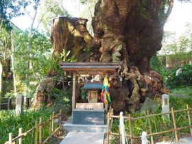 熱海「来宮神社」の大楠パワーでご利益倍増する方法を伝授!