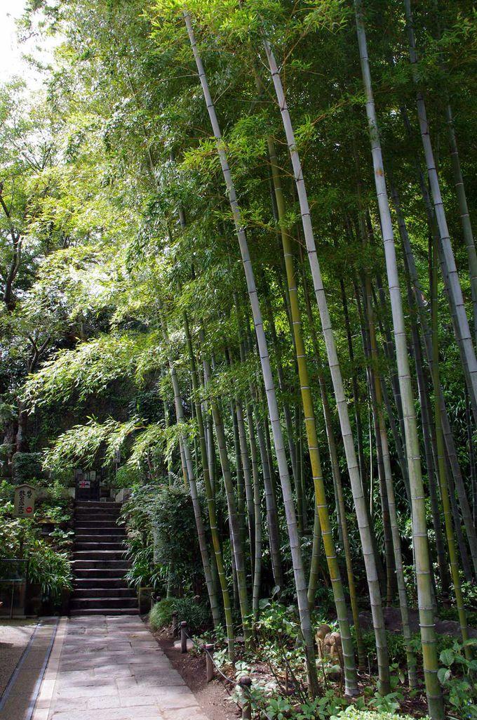 竹やぶの先にある、もう一つの絶景スポット