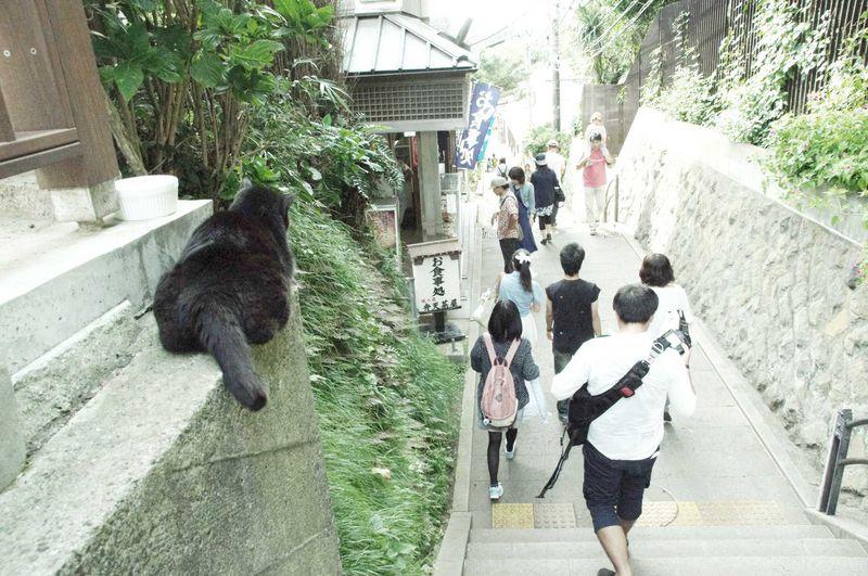 自然と癒しを求めて江ノ島へ!「江ノ島 稚児ヶ淵」と「江ノ島の猫」に触れる旅