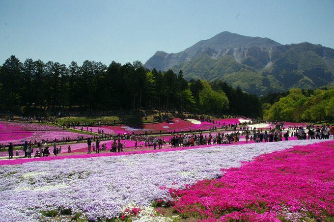 ハート型のデザインも!9色の芝桜が描き出すピンク色の世界