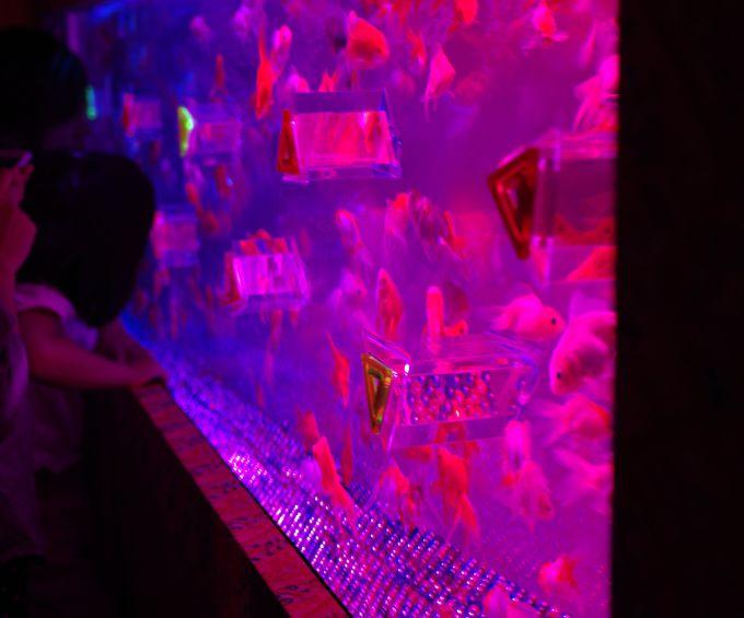 のぞいてビックリ!金魚が映る万華鏡「カレイドリウム」