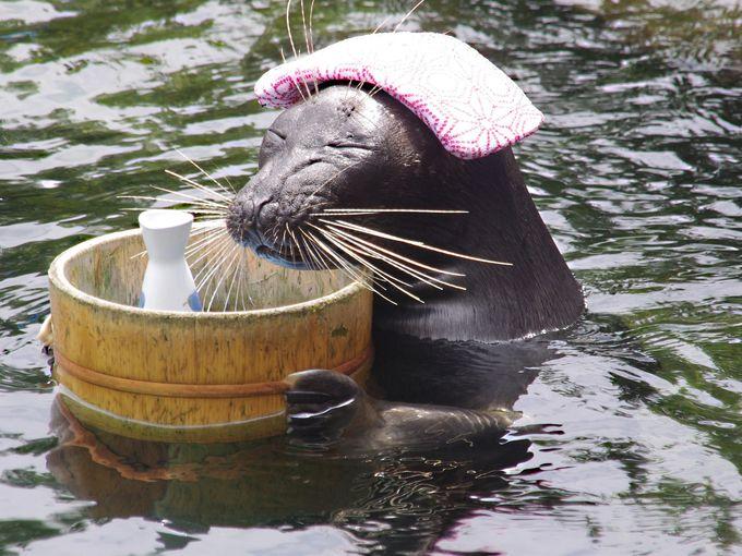 """温泉アザラシ""""ビリー""""に会えるのは「箱根水族館」"""