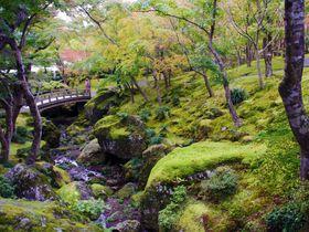 箱根フリーパス 使い方ガイド!団体客と重ならないルートでスイスイ箱根観光♪