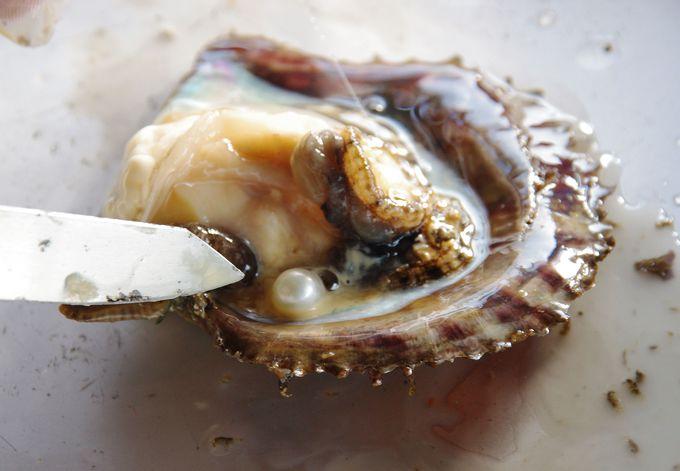 真珠はこうやって取り出す!世界に1つだけの真珠アクセサリー体験「真珠の里」