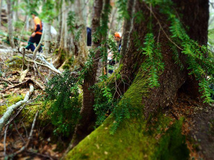 苔の森、あなたはいくつ回る?