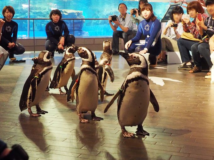 よちよち歩きでペンギンが恐竜と出会う!すみだ水族館人気のプログラム
