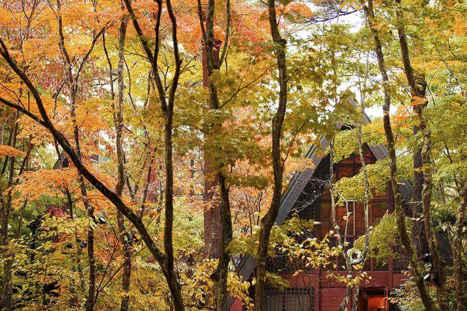軽井沢高原教会周辺の紅葉の見頃は?