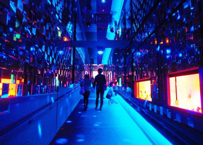 5000枚の鏡を敷き詰めた、幻想的な「クラゲ万華鏡トンネル」
