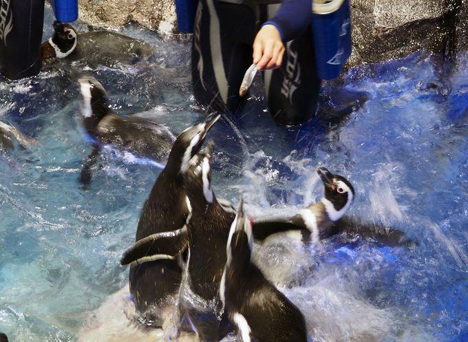 恋人より魚ください!…食欲には勝てないペンギン