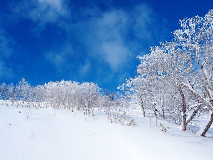 青と白のコントラストが美しい霧氷