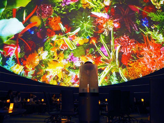 なんて美しい!巨大な花々に覆われる不思議な体験