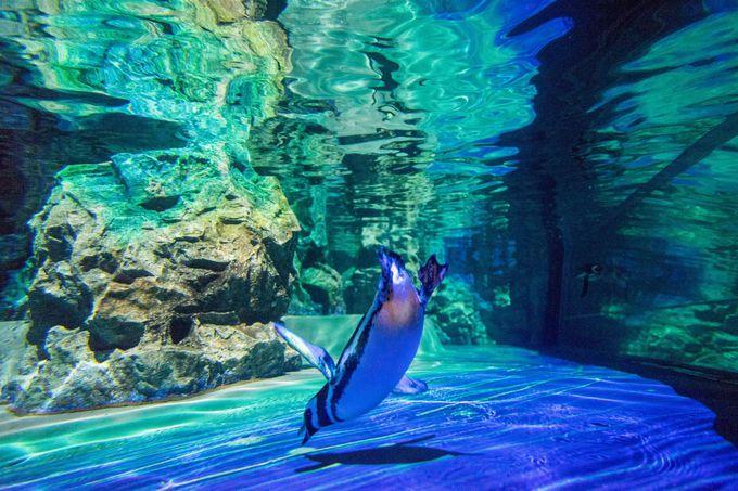 パワーアップしたマッピングでペンギンも活動的に!