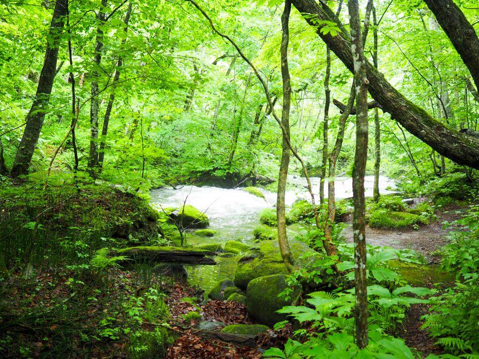 奥入瀬渓流(おいらせけいりゅう)は苔の宝庫!