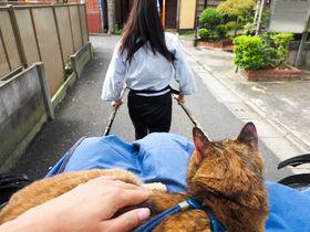 猫つき人力車?看板猫と谷中を巡る「人力車 谷中 音羽屋」でほっこり温まろう|東京都|トラベルjp<たびねす>
