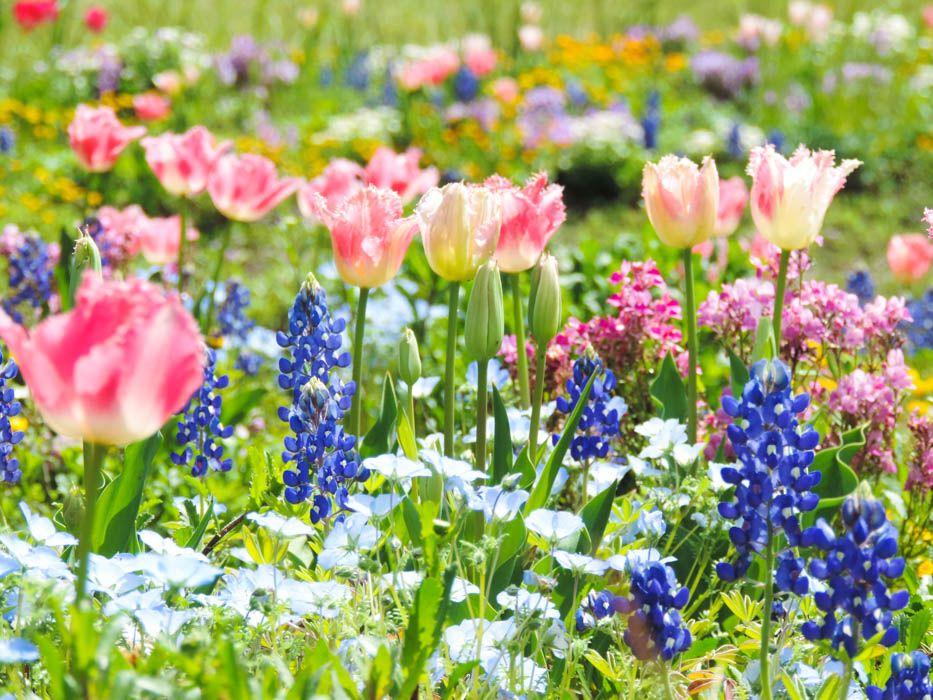 2週間ごとに姿を変える花の絨毯「ワイルドフラワーの里」