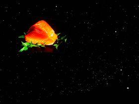 夜空にマグロが!!漁師気分で楽しむ焼津のプラネタリウム|静岡県|トラベルjp<たびねす>